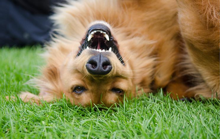 Dogs in Parks | District of West Vancouver